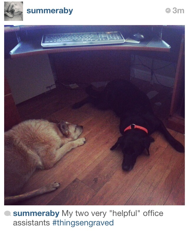 """Photo shared with us from @summeraby of her two """"helpful"""" office assistants!"""