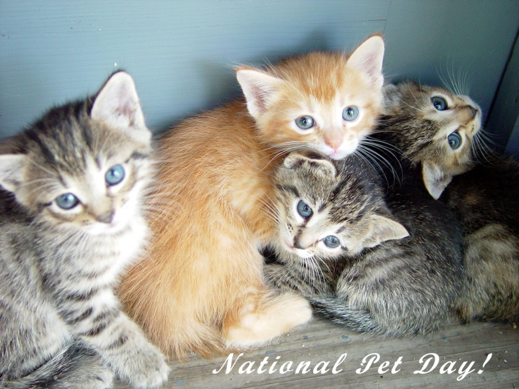 national pet day image